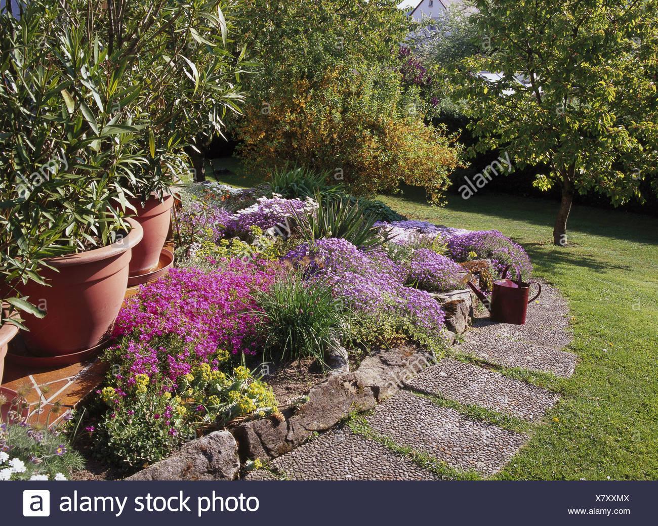 Plantes De Terrasse Arbustes fleur fleurs jardin lit rocaille façon étés prairie arbres