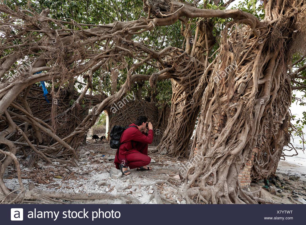 Les touristes de prendre des photographies, des racines d'arbre couvrant les murs d'une vieille maison à Elinkine, Casamance, Sénégal Banque D'Images