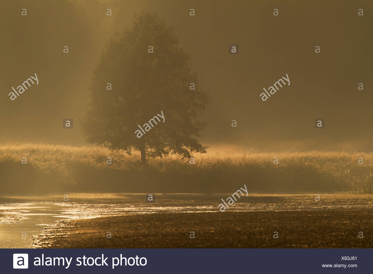 Ambiance du matin avec brouillard , Allemagne, Saxe, Bavière Photo Stock