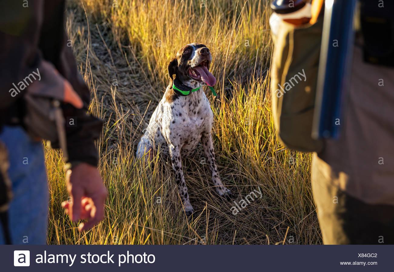 Commande en attente de chien Photo Stock