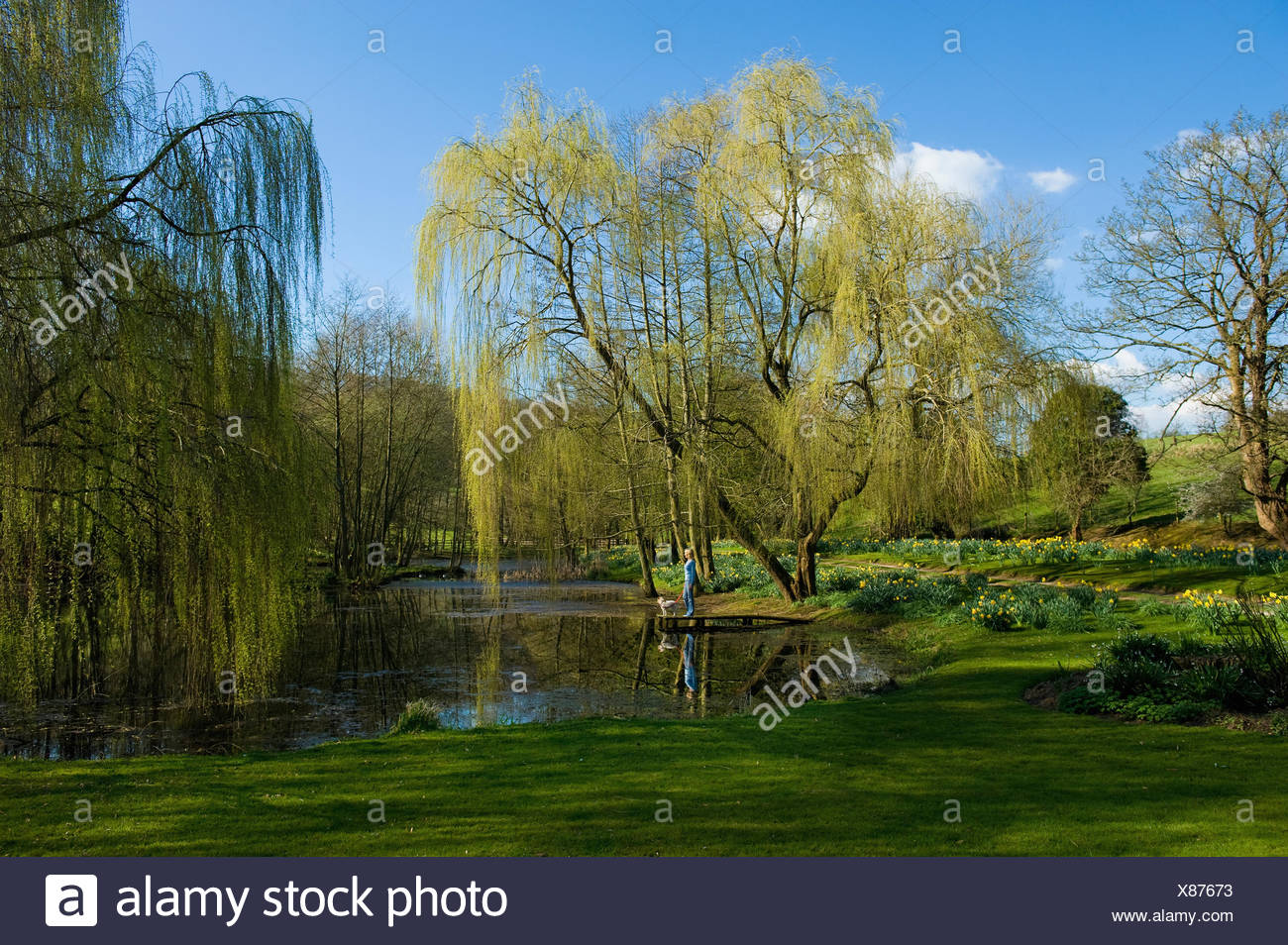 Une femme et un chien debout sur une jetée sur un lac, avec saule pleureur frondes atteignant jusqu'à l'eau. Photo Stock