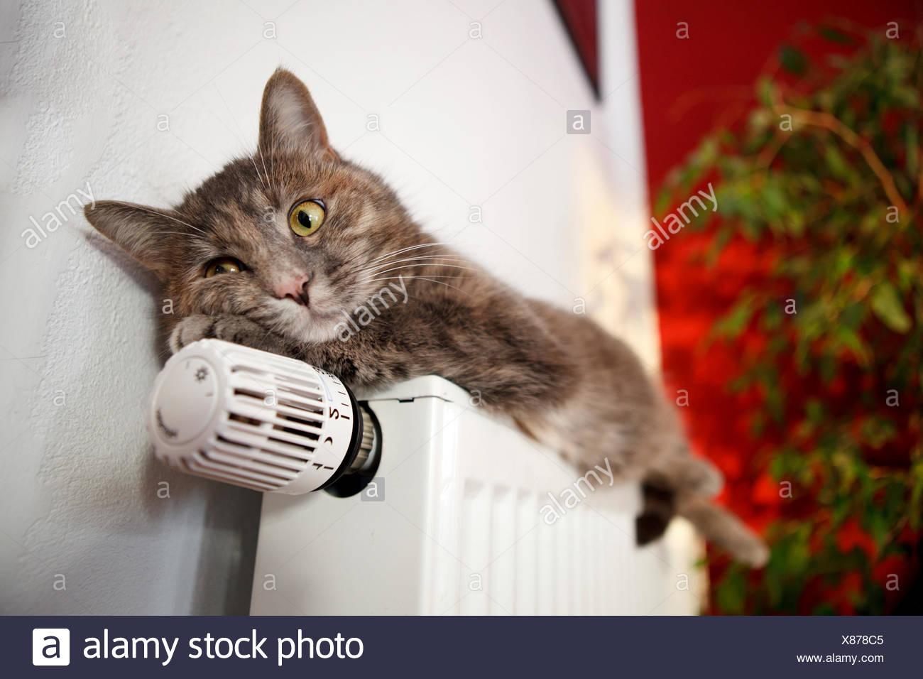 Lazy cat allongé sur un radiateur Photo Stock