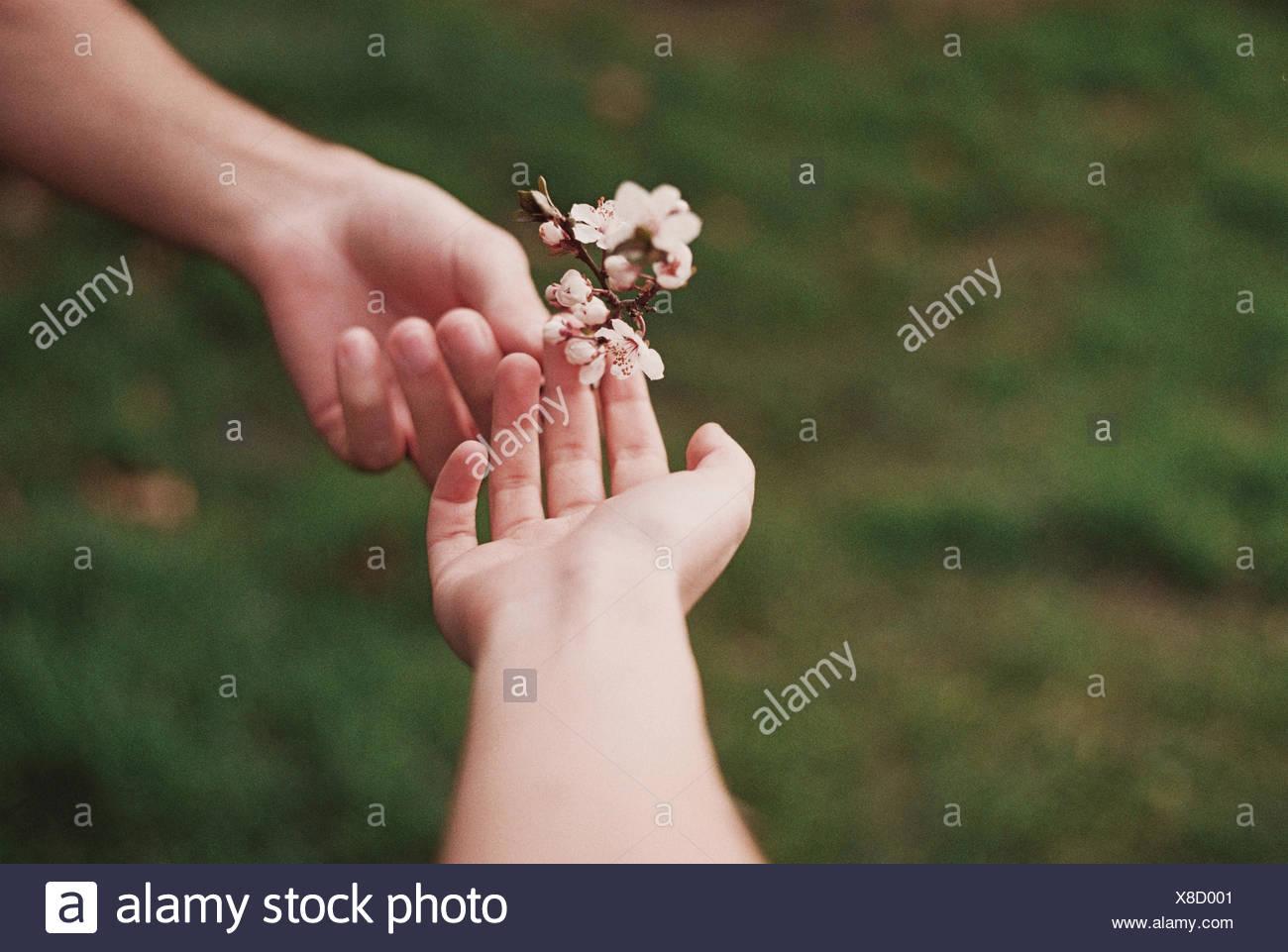 Deux personnes partageant flower Photo Stock