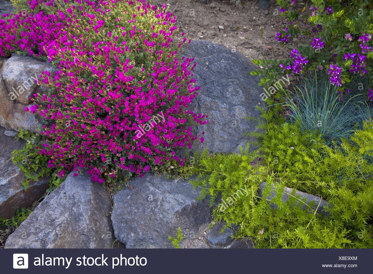 Monaco Des Fleurs Dans Le Jardin Japonais D Italie Banque D Images