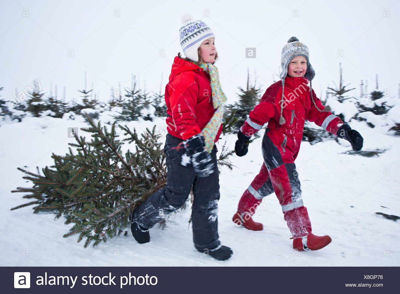 Enfants pulling Christmas Tree Photo Stock