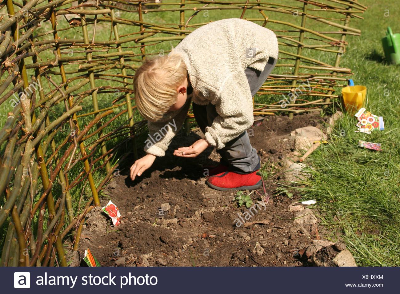 Petit garçon et radis carottes semer sur son propre potager séparé par une clôture faite de branches de saule, Allemagne Photo Stock