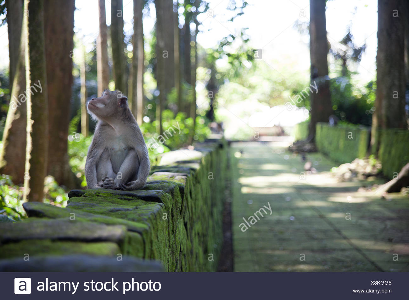 Monkey Sitting par les troncs d'arbres Photo Stock