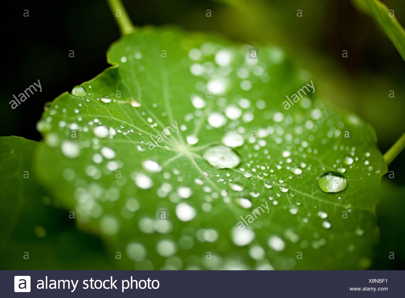 Les gouttelettes d'eau sur les feuilles Photo Stock