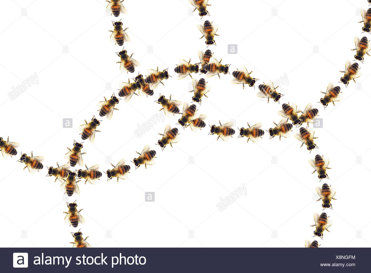 Les cercles d'abeilles Les abeilles, marcher en rond, composition Photo Stock