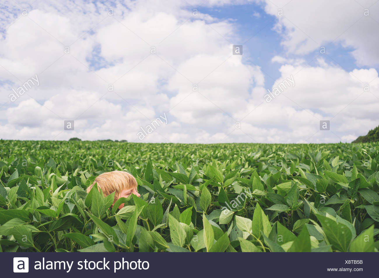Tête du garçon dans un champ de maïs Photo Stock