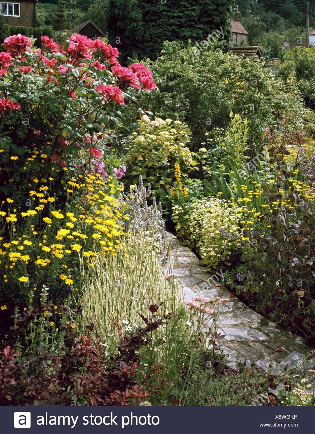 frontière mixtes avec lysamachia - lunaria tanacetum hortensia rose