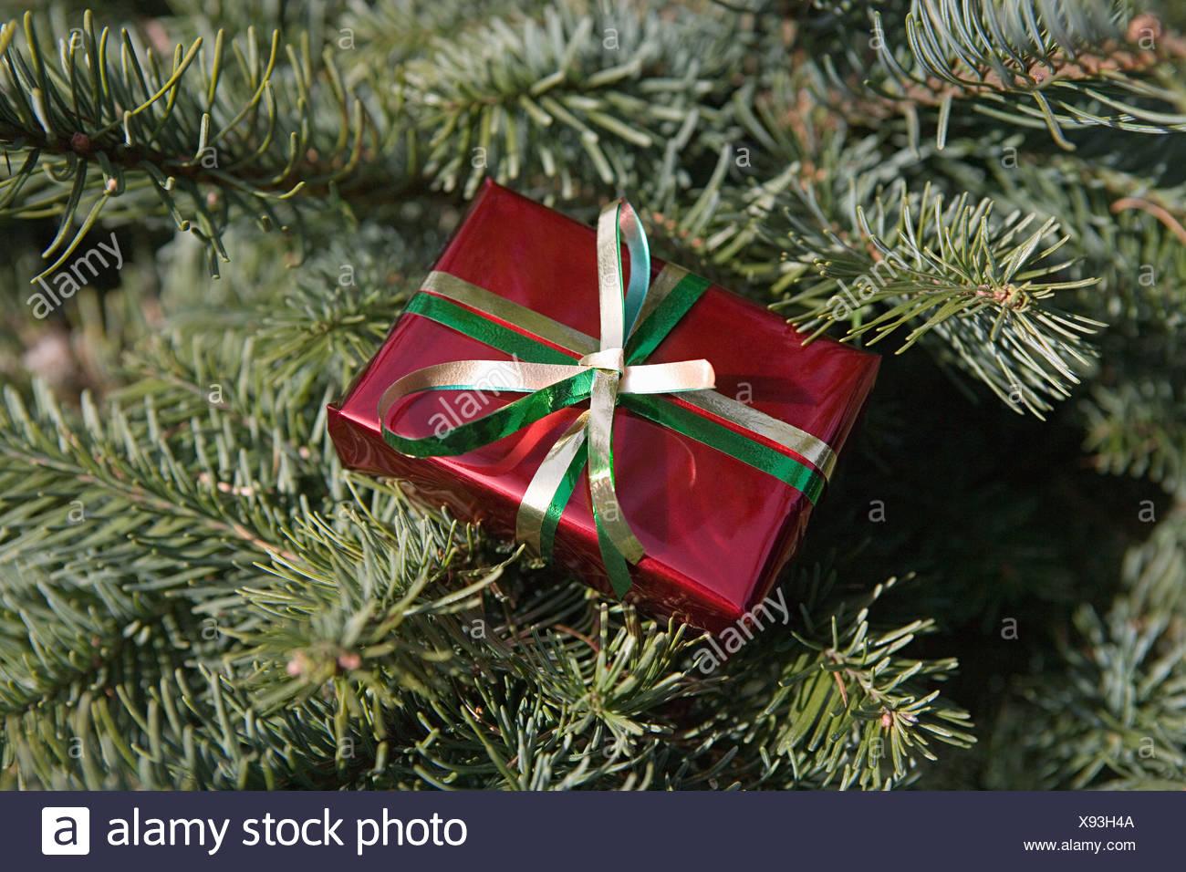 Petit cadeau de noël on tree Photo Stock