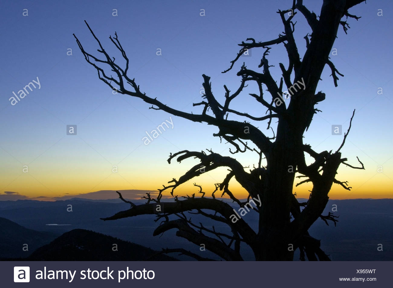 La silhouette d'un arbre au lever du soleil dans le Parc National du Grand Bassin, NV. Photo Stock