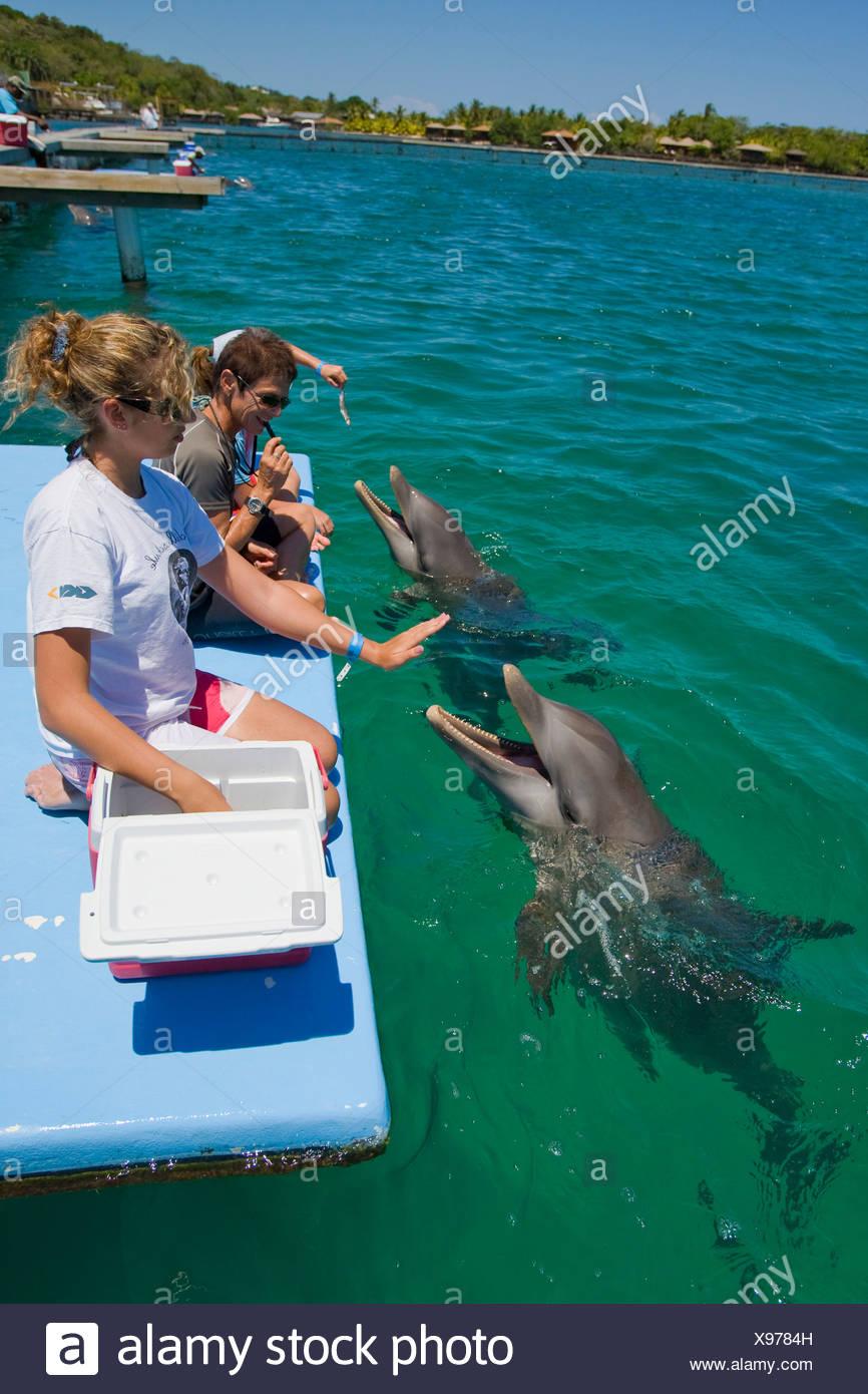 L'école des enfants qui reçoivent un cours de biologie d'un entraîneur de dauphin, Anthony's KSchool enfants ey Resort, Roatan, Honduras, Photo Stock