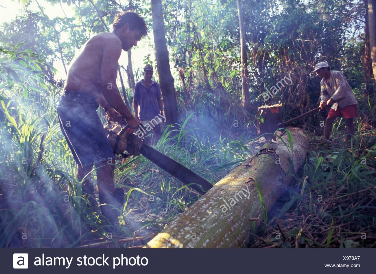 L'exploitation forestière illégale, la coupe d'arbre avec tronçonneuse, forêt amazonienne la déforestation. Photo Stock