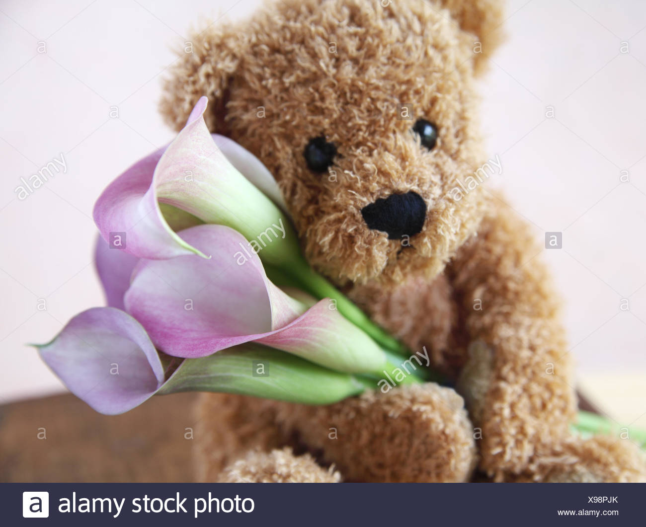 L'affection d'ours teddy Photo Stock