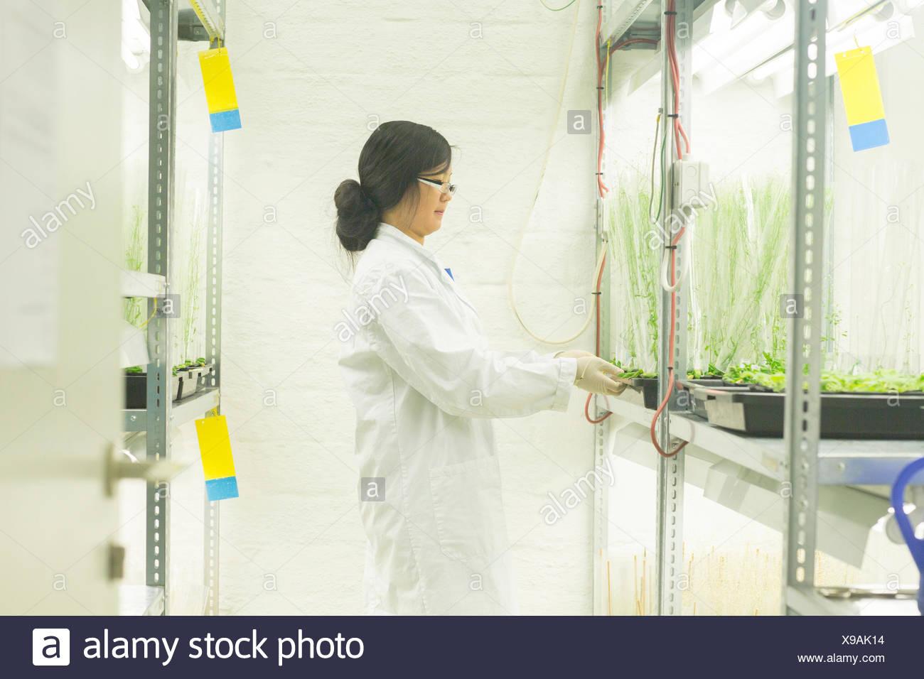 Libre choix des échantillons en laboratoire à effet Photo Stock