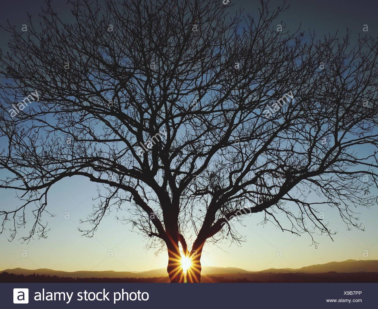Arbre nu Silhouette contre le ciel au coucher du soleil Photo Stock
