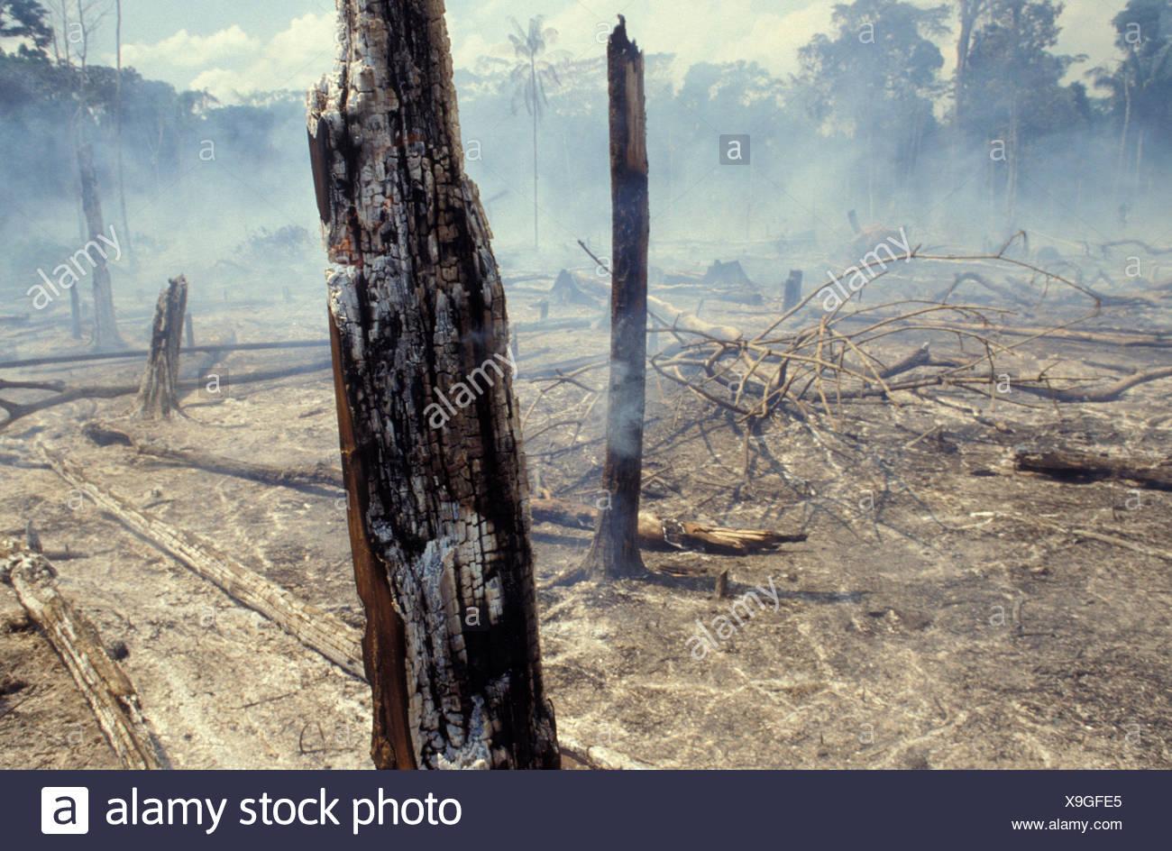 Forêt Amazonienne la gravure. La déforestation. Le Brésil. Arbres brûlés, déséquilibre écologique, du défrichage. Photo Stock