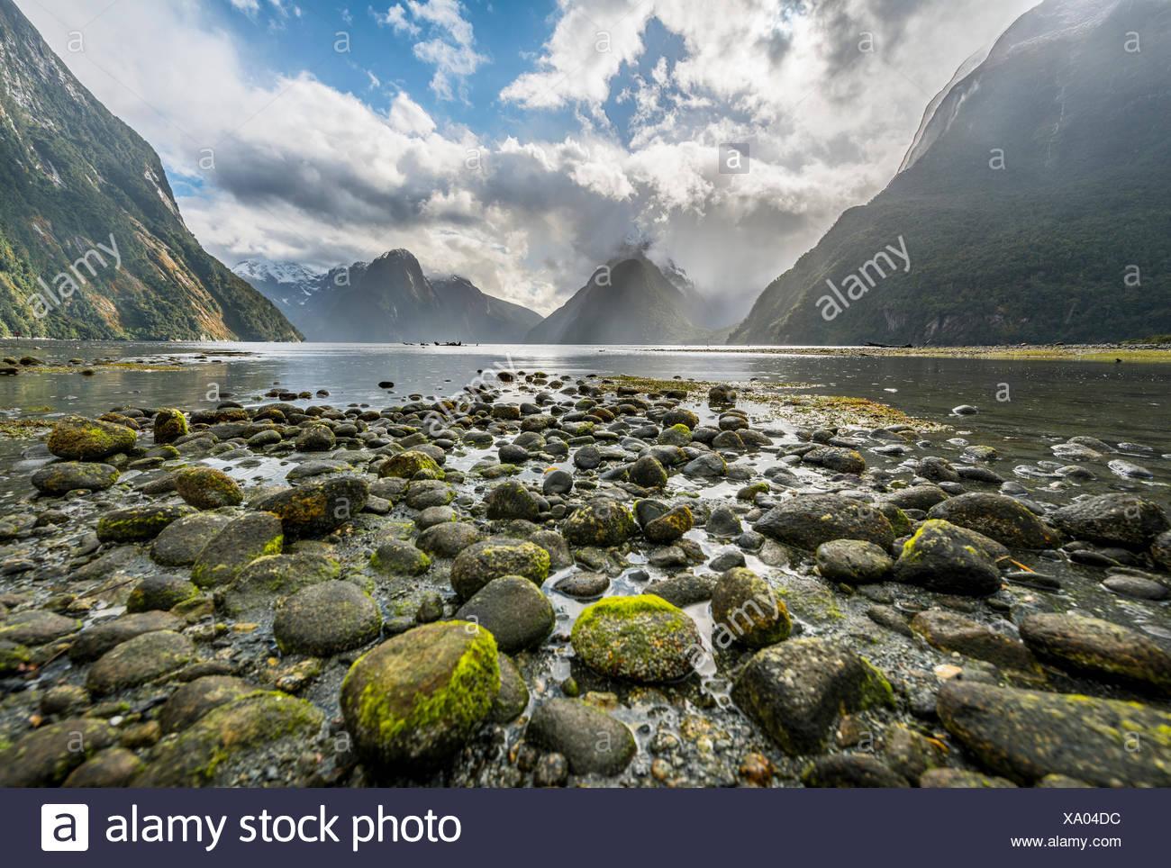 Les pierres couvertes de mousse, Mitre Peak, Milford Sound, Fiordland National Park, Te Anau, Southland Région, Southland, Nouvelle-Zélande Photo Stock