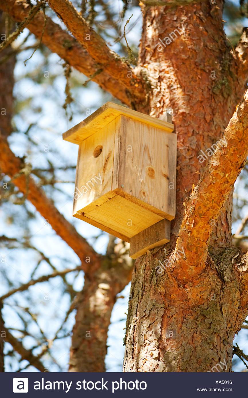 Maison d'oiseau sur l'arbre Banque D'Images