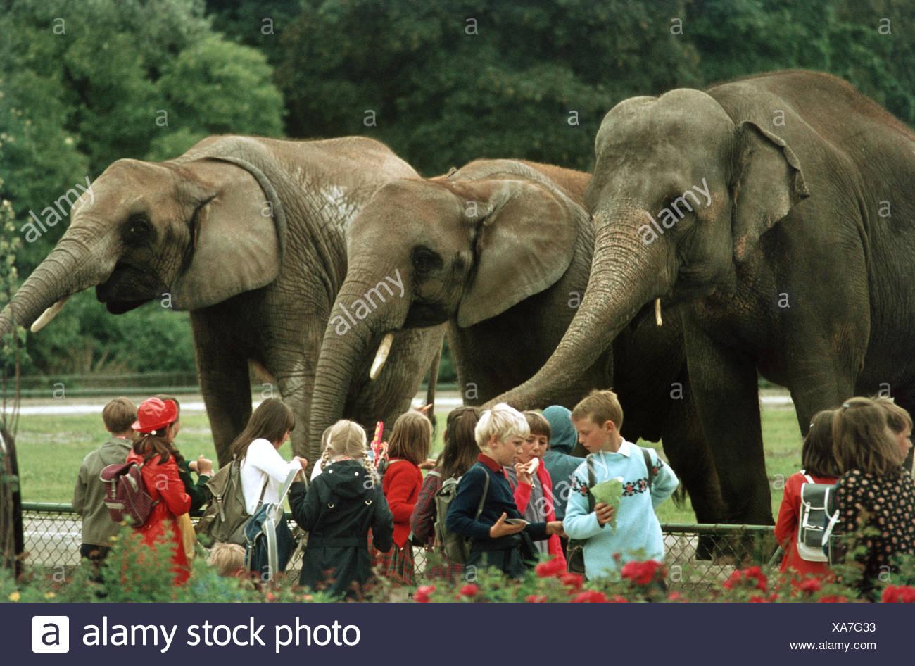 L'éléphant d'Asie, l'éléphant d'Asie (Elephas maximus), classe d'école, au zoo en face d'une enceinte en plein air avec trois animaux Photo Stock