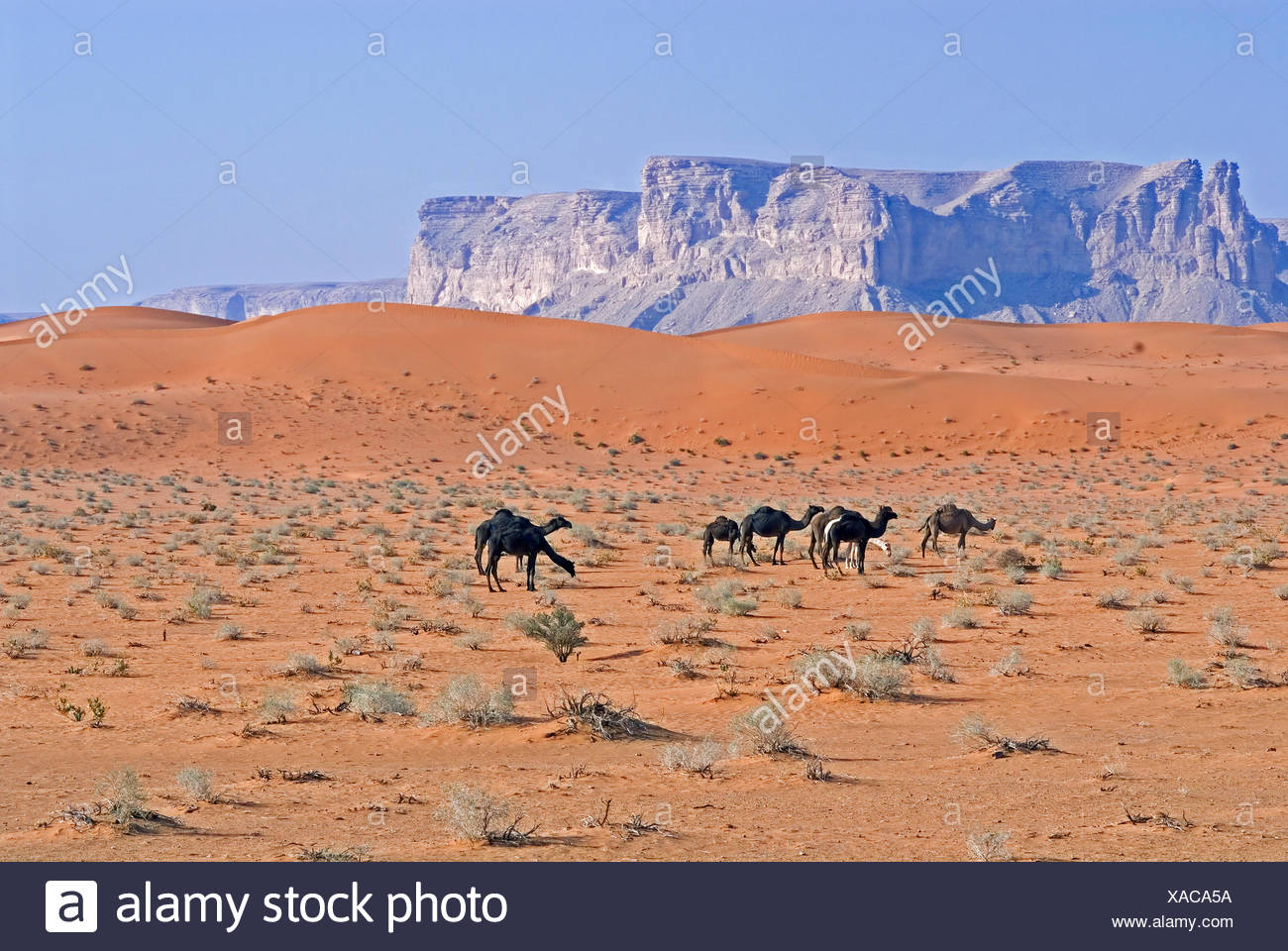 Sables Rouges,l'Arabie saoudite Photo Stock