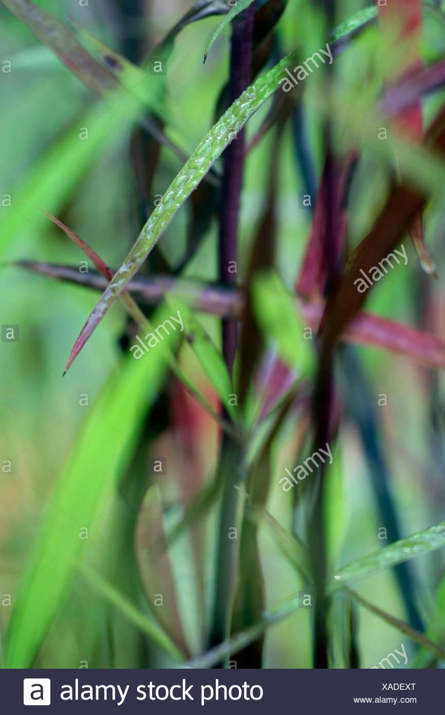 Gouttes d'eau sur des brins d'herbe Banque D'Images
