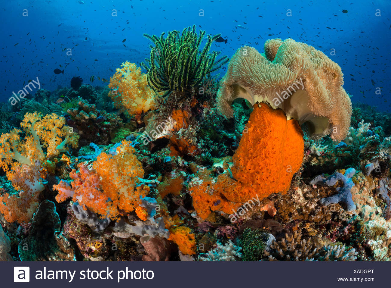 Les récifs coralliens colorés, Komodo, Indonésie Photo Stock