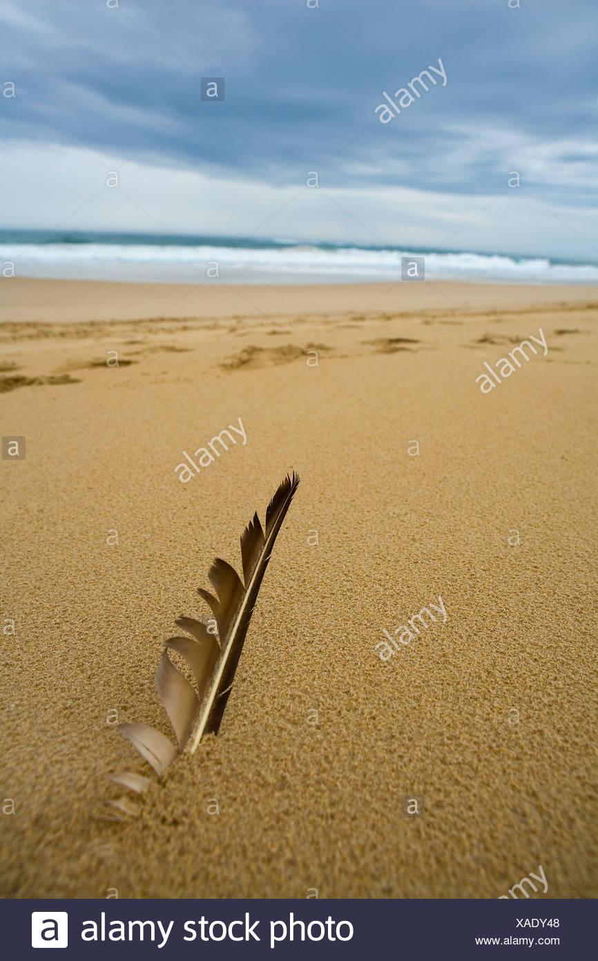 Vue rapprochée de plume d'oiseau dans le sable de la plage, Sardaigne Bay, Port Elizabeth, Eastern Cape Province, Afrique du Sud Photo Stock