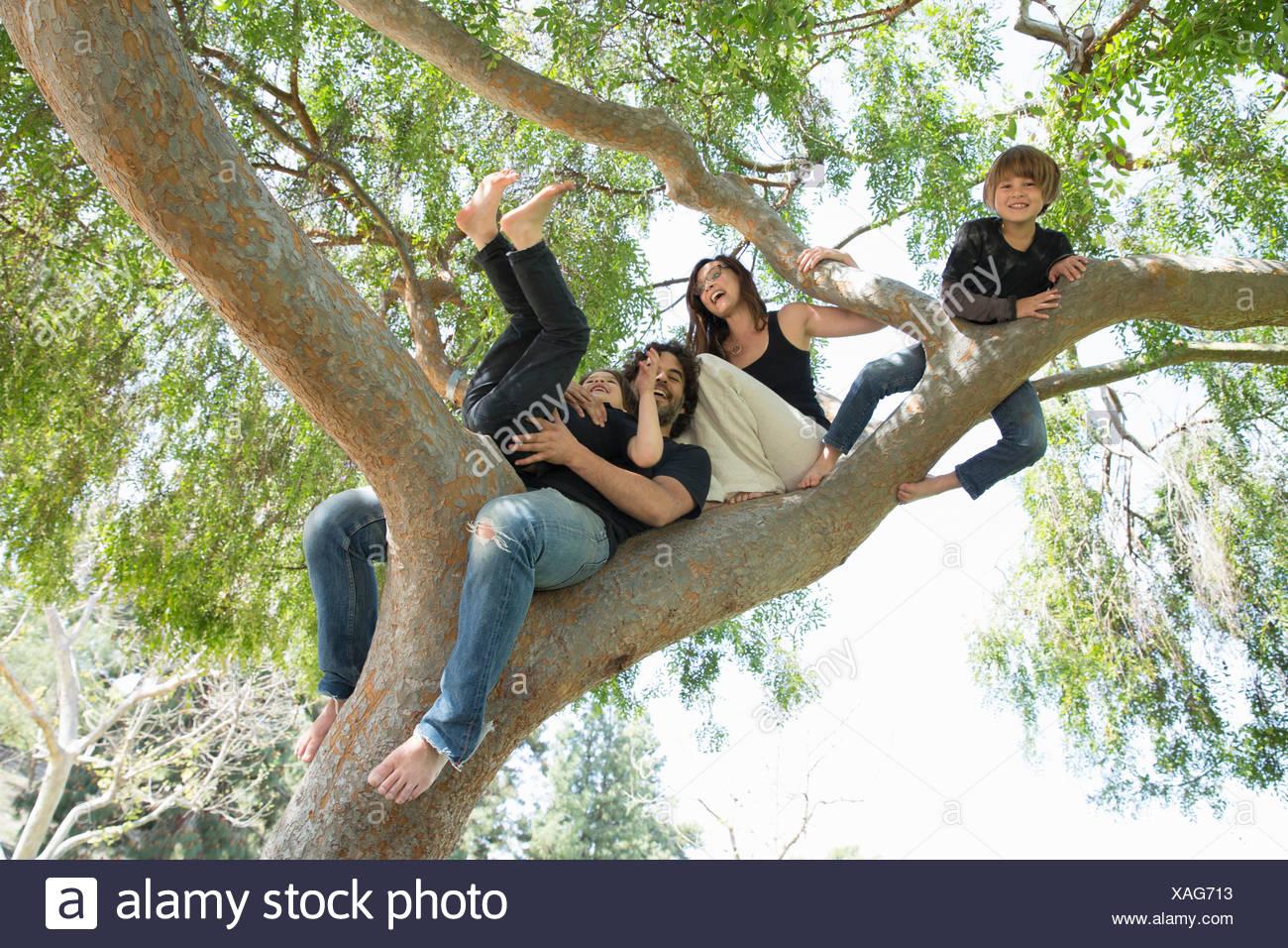 Portrait de famille avec deux garçons de grimper sur des arbres du parc Photo Stock