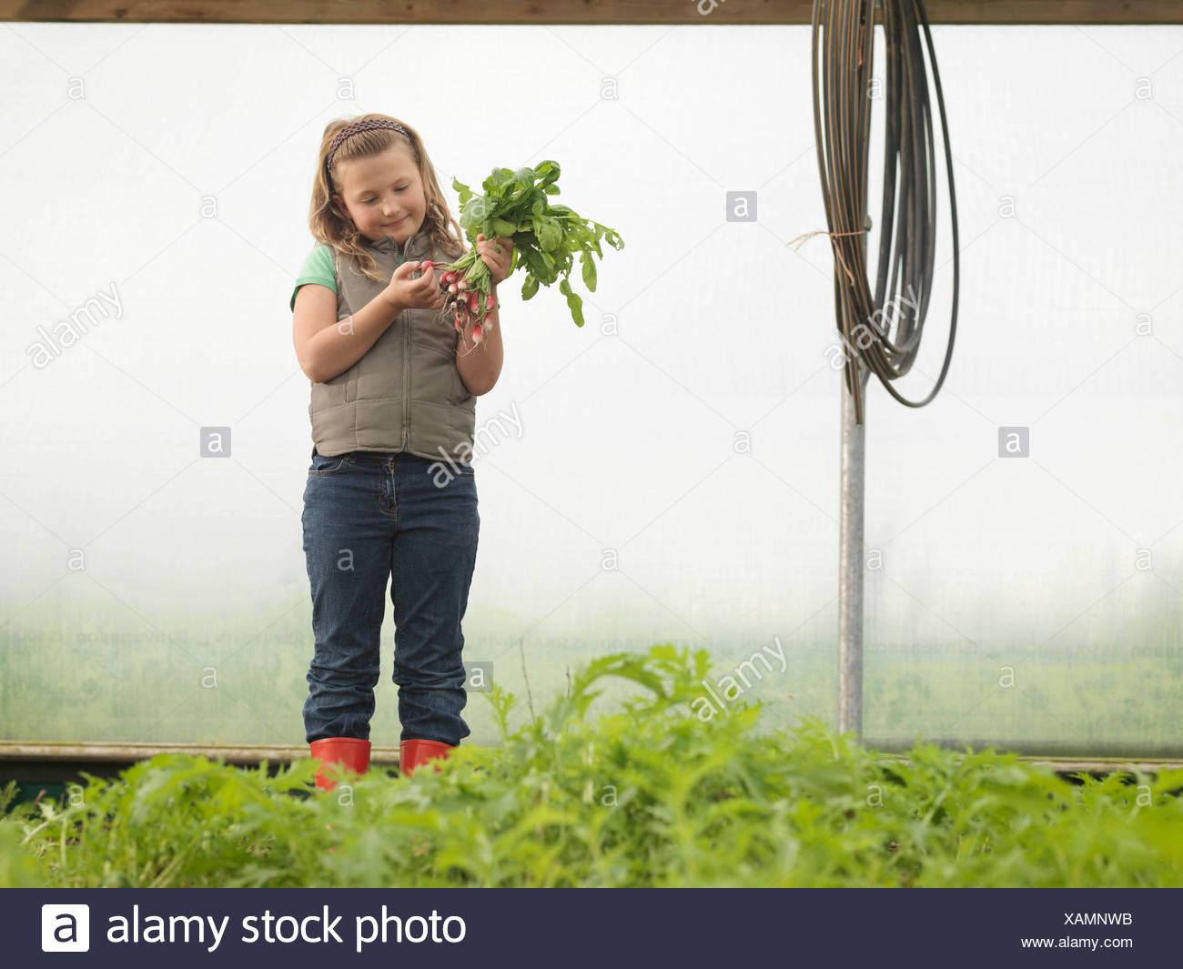 Girl In Polytunnel et radis Photo Stock