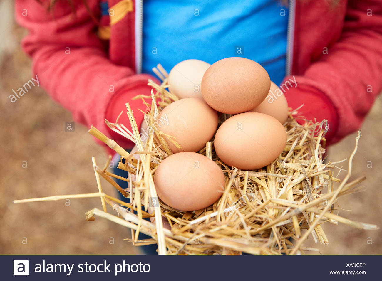 Close up girl holding fresh, oeufs brun organique Photo Stock