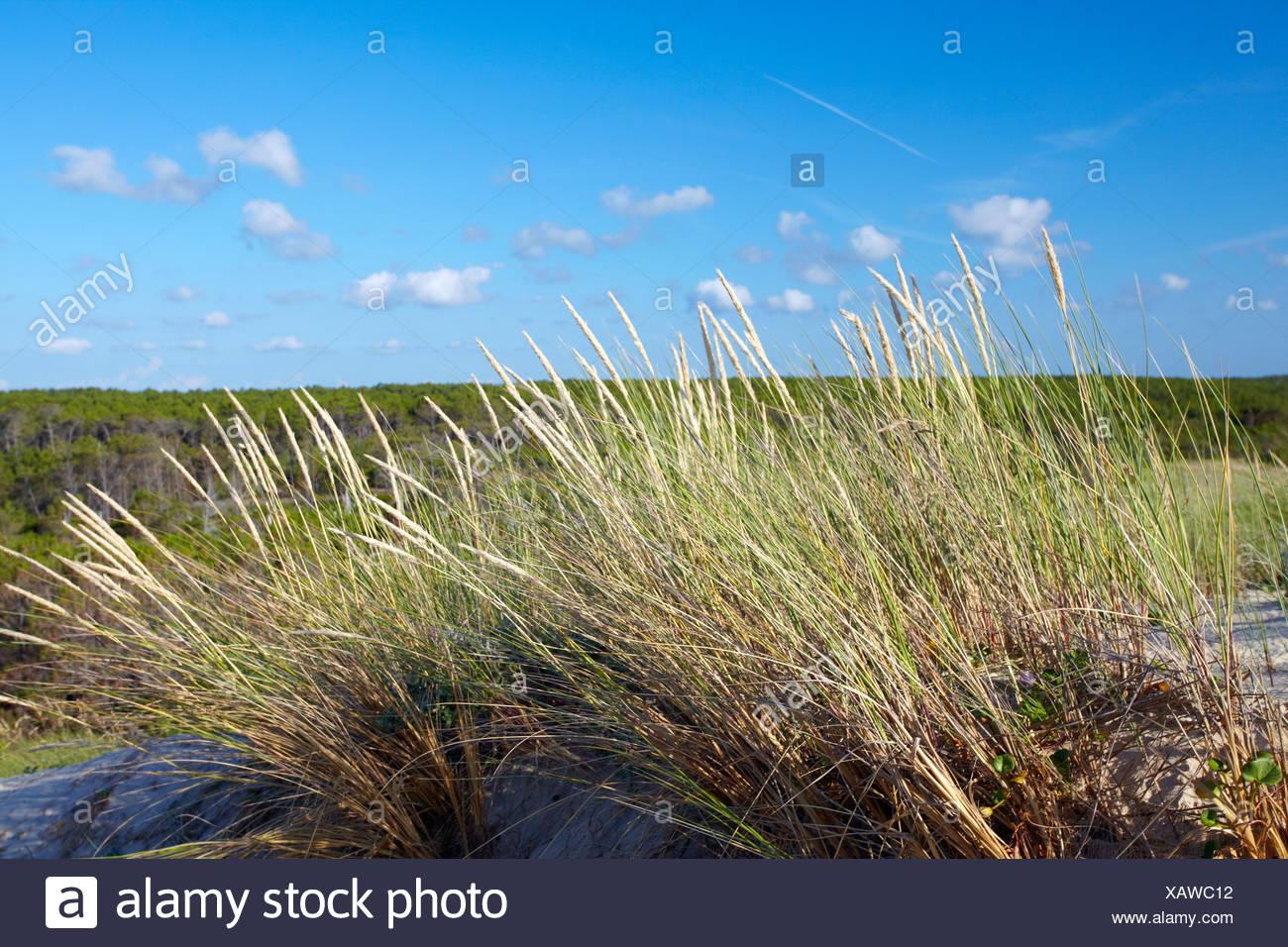 Plage de Mimizan, Landes, Aquitaine, France du Sud, France, Europe Photo Stock