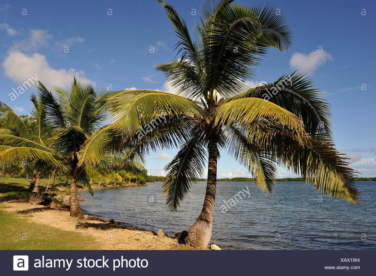 La plage de Babin, Morne-a-l'eau, Grande-Terre, Guadeloupe, région d'outre-mer de la France, Vent Îles, Petites Antilles, Caraïbes. Banque D'Images
