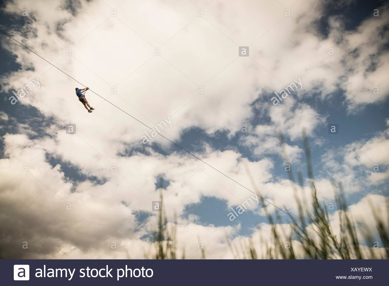 Homme mature sur zip wire over field Photo Stock
