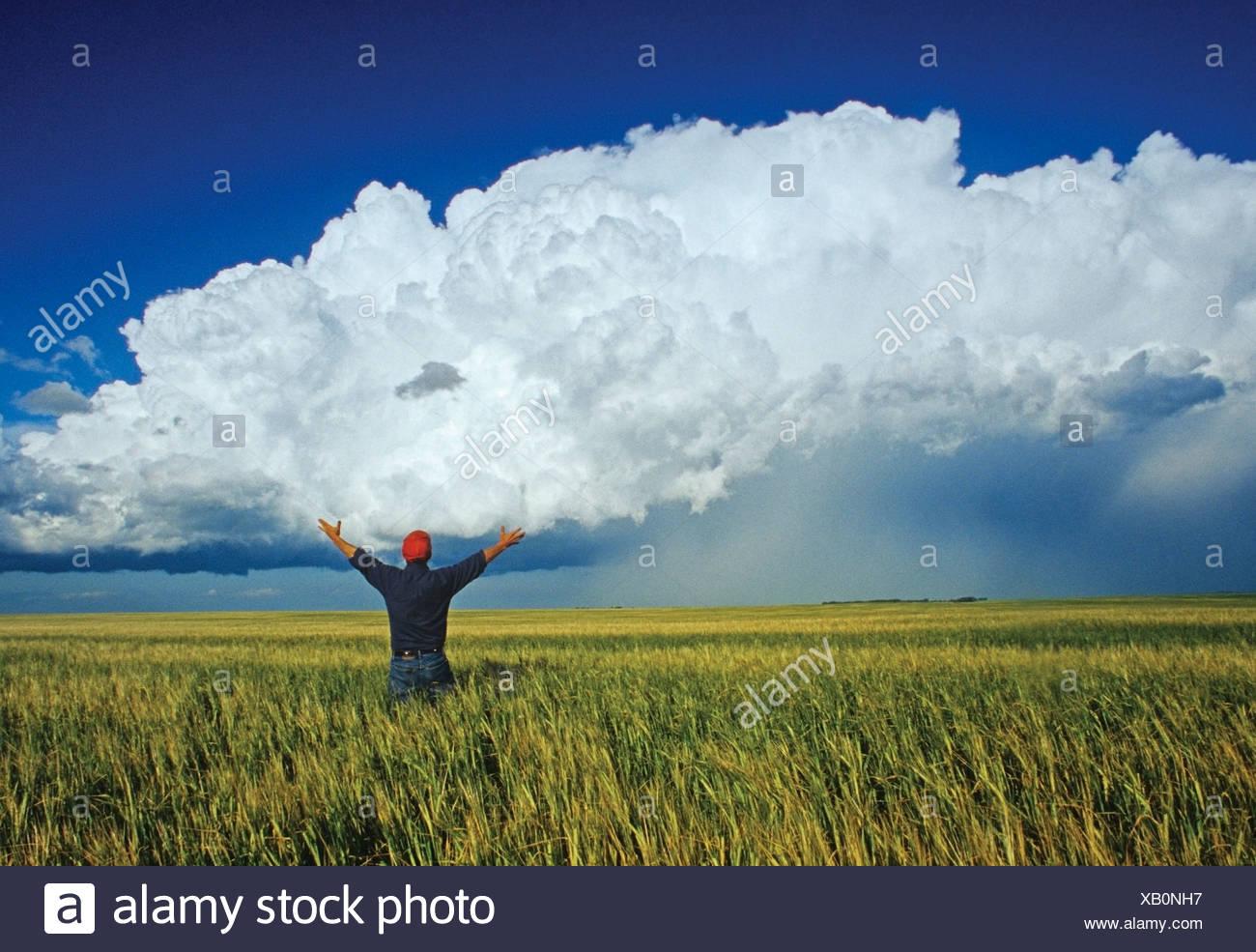 Un agriculteur donne sur un champ d'orge avec un cumulonimbus en arrière-plan de masse près de Bromhead, Saskatchewan, Canada Photo Stock