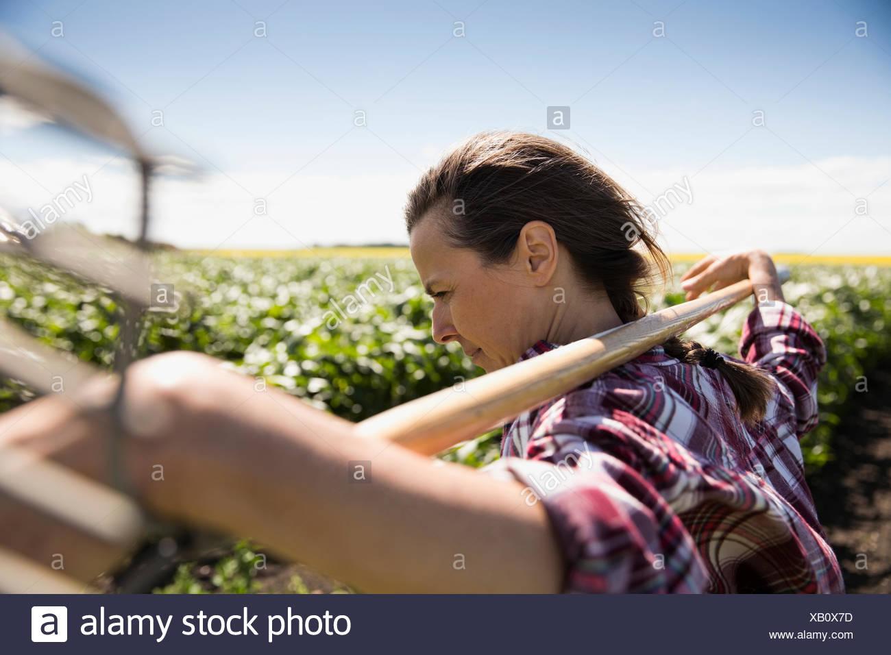 La productrice exerçant son râteau sur sunny farm Photo Stock