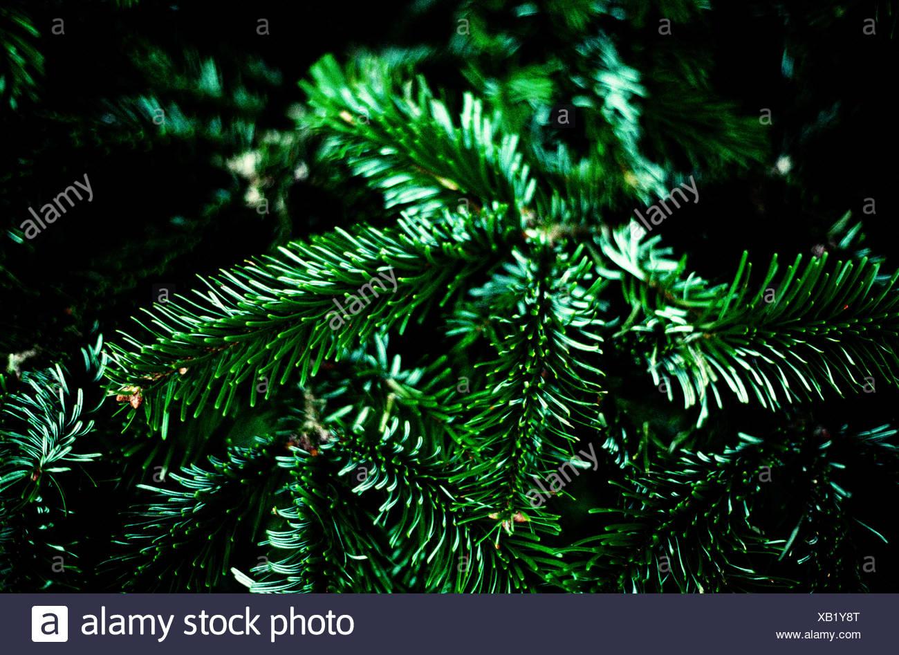 Un arbre de Noël, close-up Photo Stock