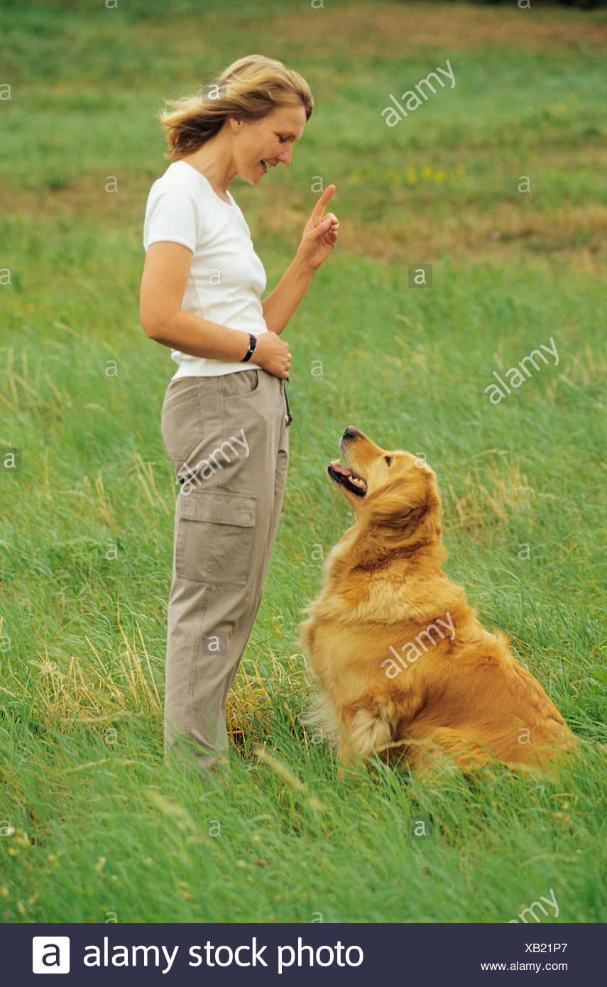 """Femme avec chien Golden Retriever dog - l'éducation: """"vers le bas"""" Photo Stock"""