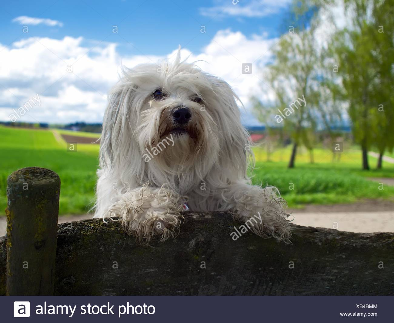 Chien cool Photo Stock
