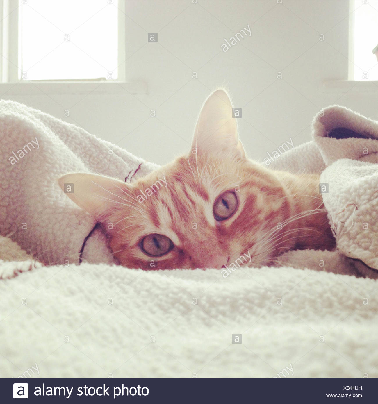 Chat paresseux dans son lit Photo Stock