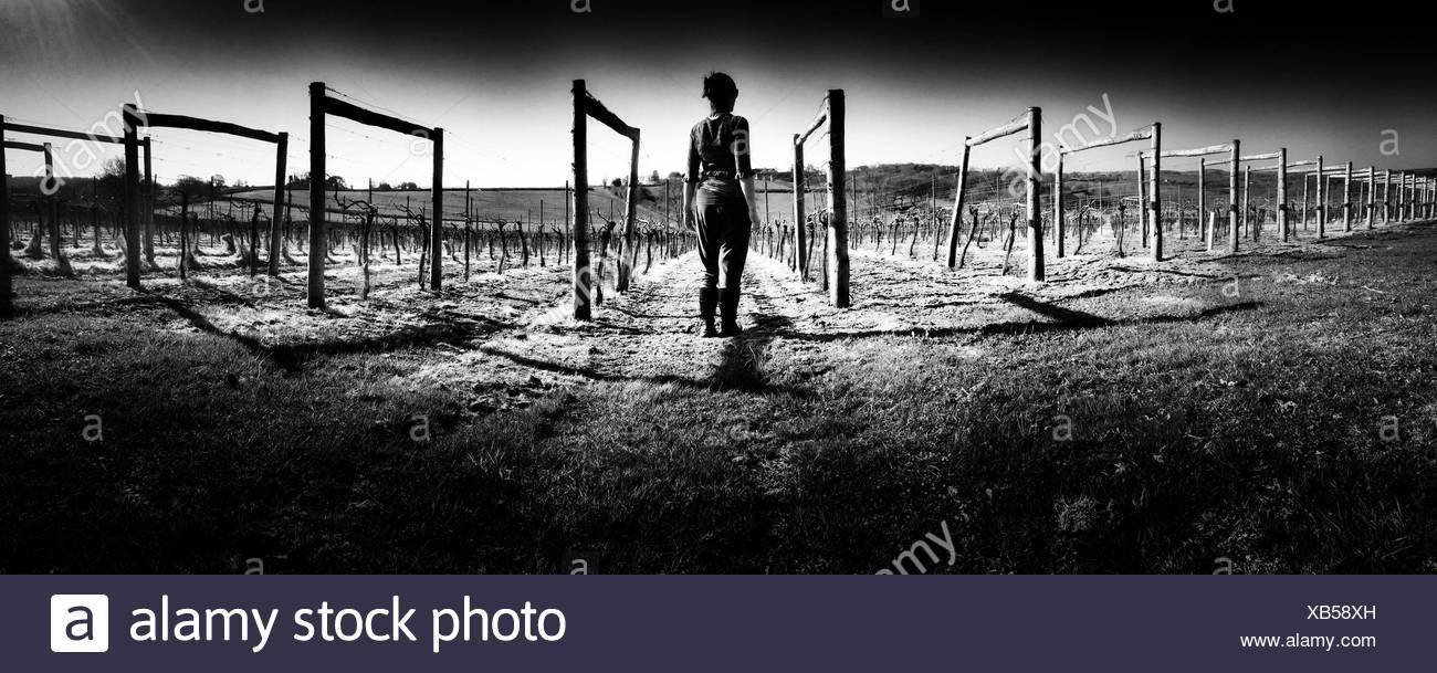 Vue arrière de la femme sur les champs de vigne Photo Stock