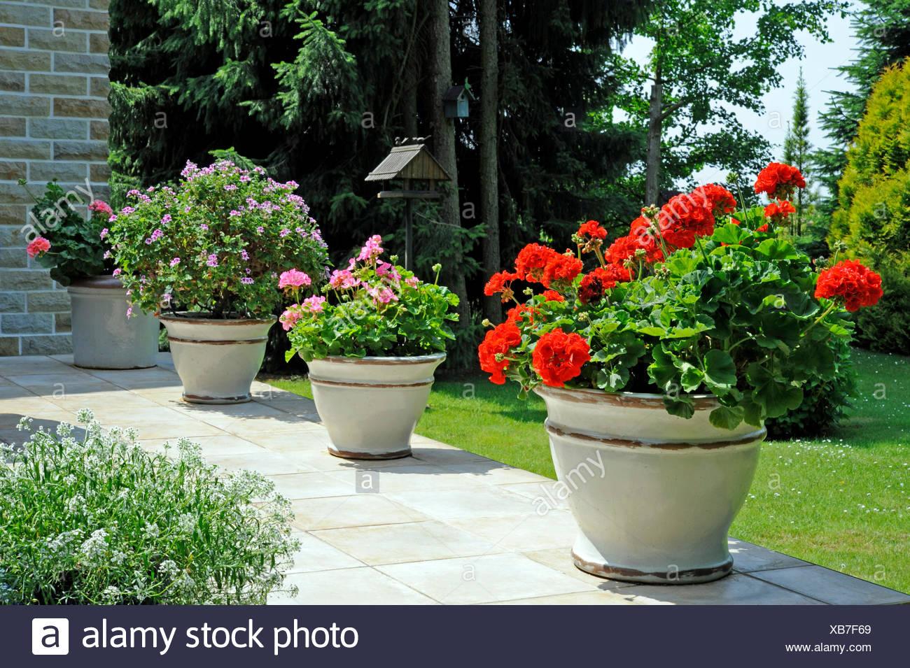 Terrasse De Jardin Avec Plantes En Pot En Ceramique