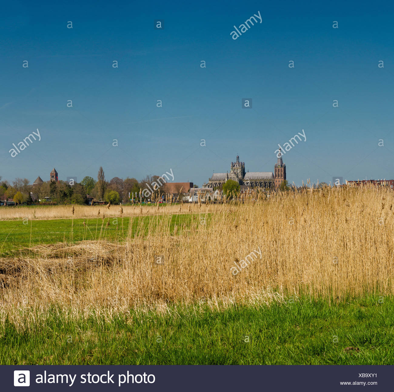 S-Hertogenbosch, Den Bosch, Pays-Bas, Hollande, Europe, paysage, champ, pré, printemps, Cathédrale, l'Église, Saint John Photo Stock