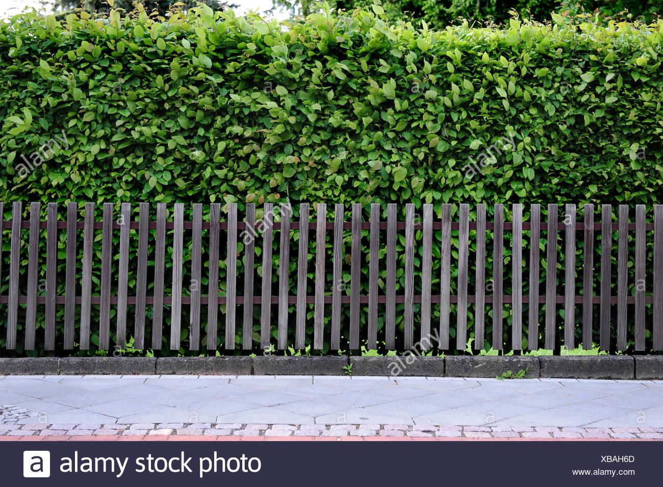 Bois, haie, clôture, en clôture, l\'escrime, la patine, latte ...