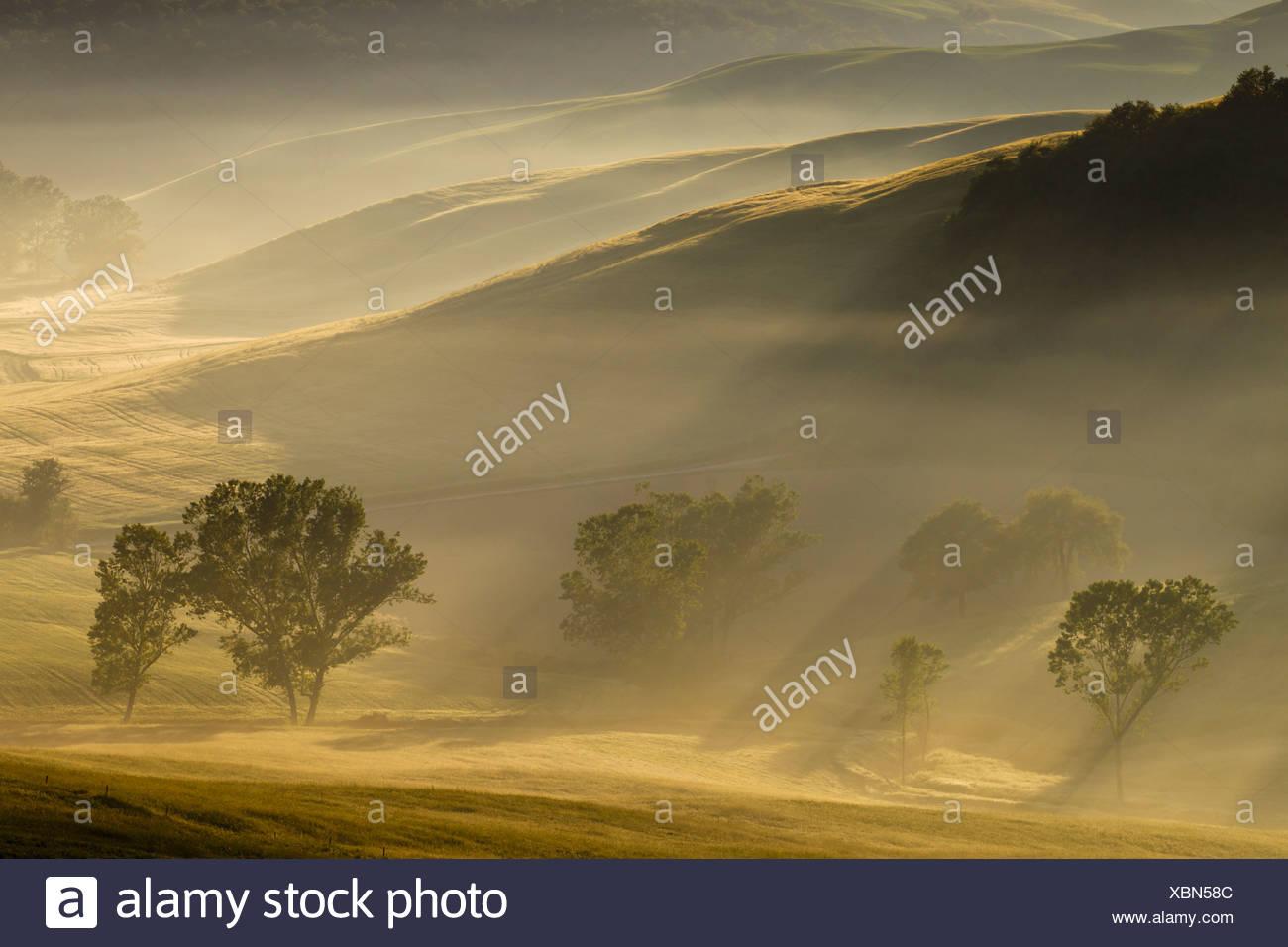 Italie, Toscane, Crète, vue sur les arbres et le brouillard en matinée Photo Stock