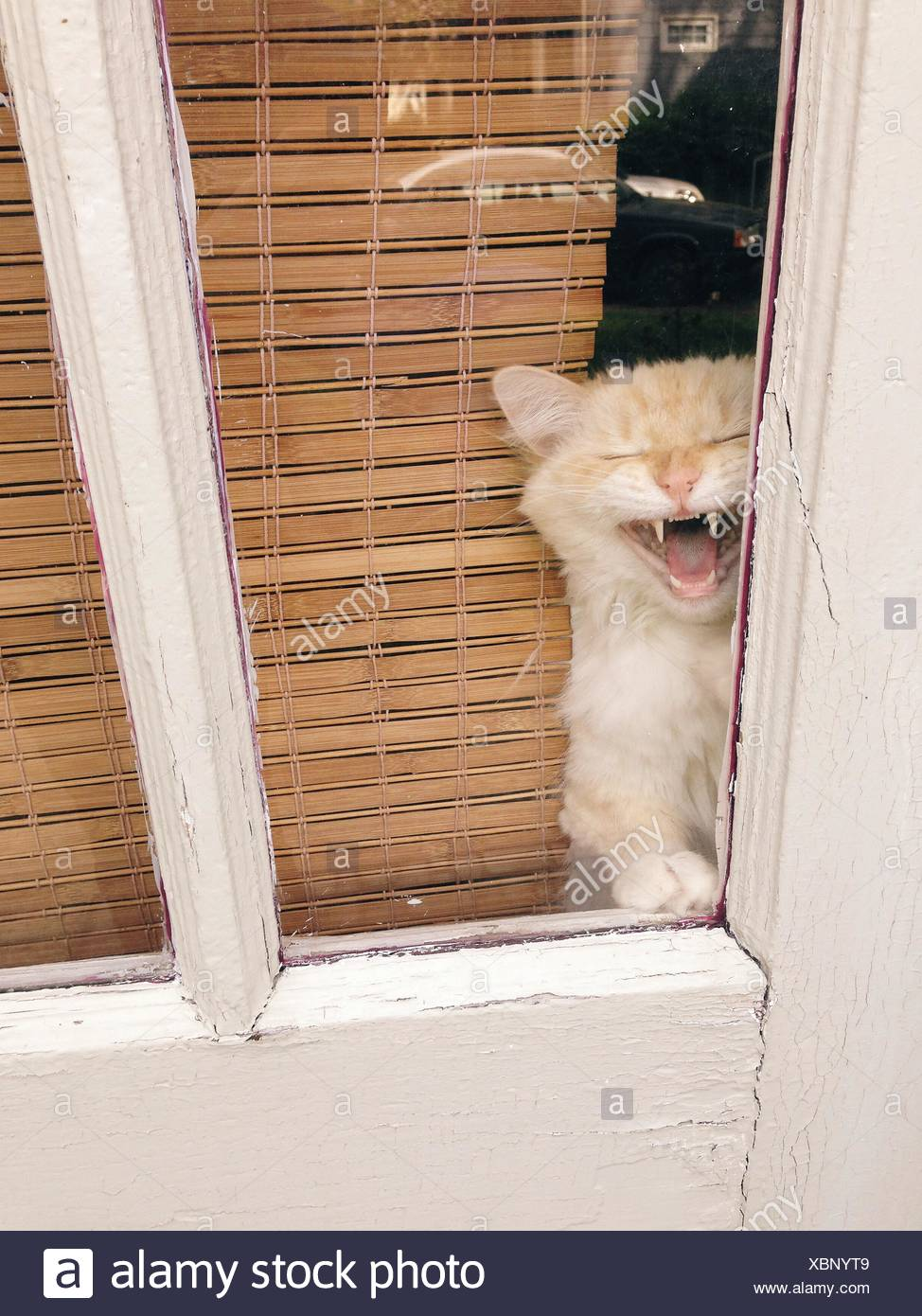 À la fenêtre de chat Photo Stock