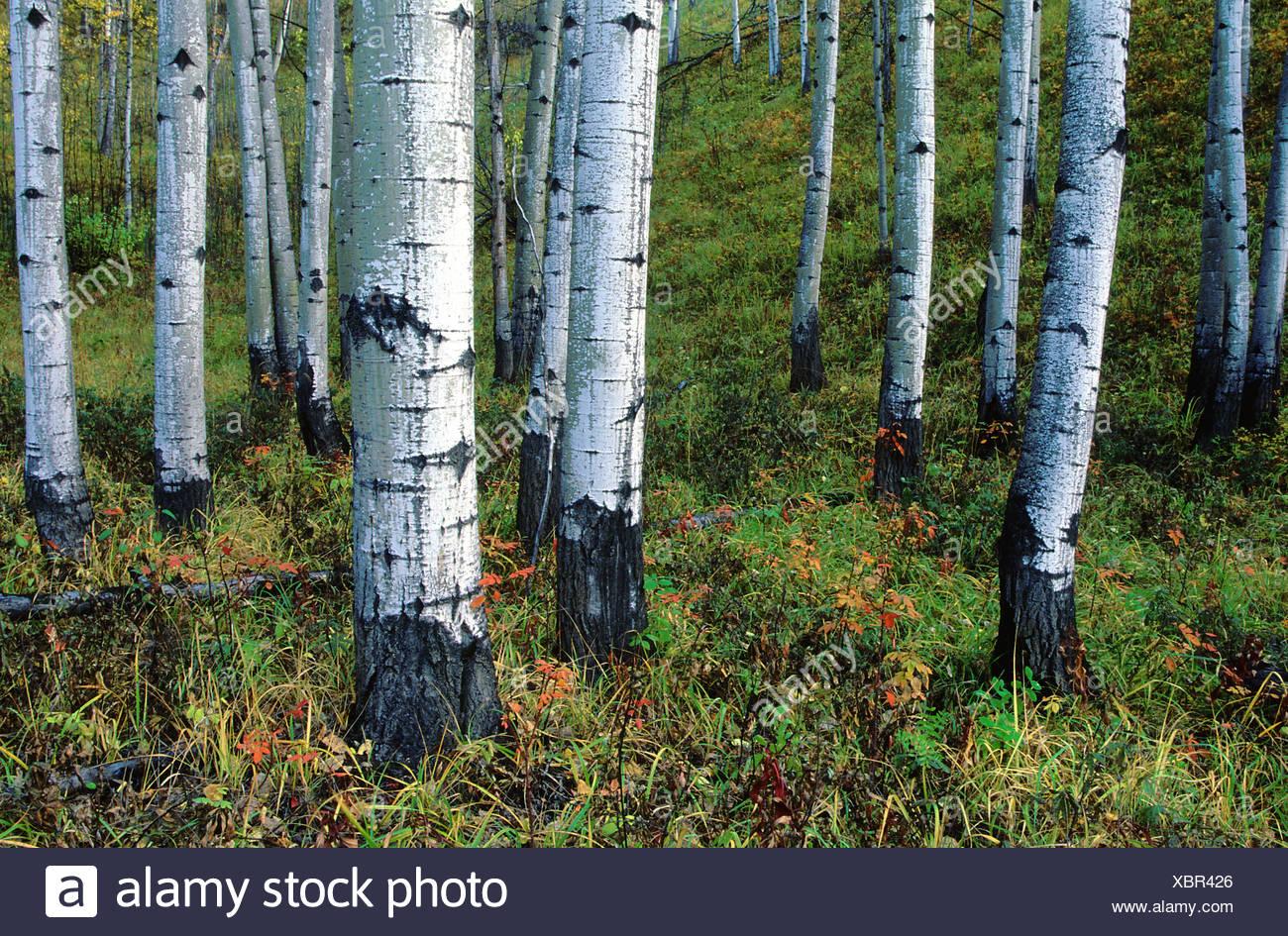 route de l 39 alaska l 39 alaska l 39 corce de troncs d 39 arbre. Black Bedroom Furniture Sets. Home Design Ideas