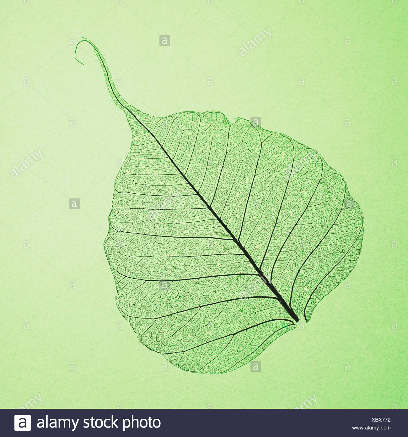 Feuille Photo Stock